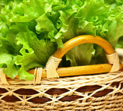 Salad. Leaves of green salad in wattled крзине. Vitamins, the vegetables useful to health Royalty Free Stock Photo