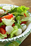 Salad with arugula, tomatoes and mozzarella Royalty Free Stock Photo