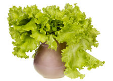 Salad as a bouquet in a ceramic vase Royalty Free Stock Images
