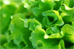 Salad background Stock Photos