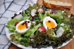 Salad with Bacon and Egg Stock Images