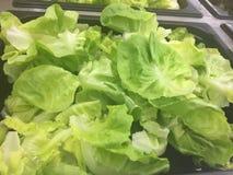 Salad Bar Fresh Vegetables Organic green Healthy Stock Photography