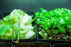 Salad Bar with Romaine Lettuce Royalty Free Stock Images
