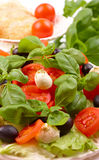 Salad with basil, mozzarella, olives and tomato Royalty Free Stock Photos