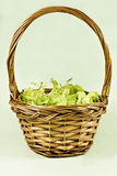 Salad basket Stock Images