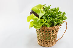 Salad basket royalty free stock image
