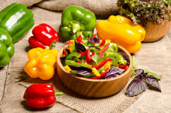 Salad from bell pepper and basil Stock Image