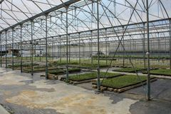 Salad in big greenhouse builiding. In state Sucre in Venezuela Royalty Free Stock Photos