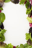 Salad border Stock Photography
