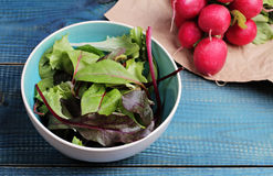 Salad in bowl and radishes on blue table. Fresh raw food diet salad.  Vegetarian food concept, healthy life style Royalty Free Stock Image