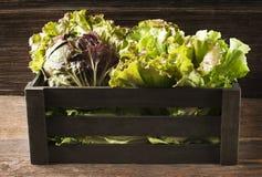 Salad in box Royalty Free Stock Photos