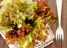 Salad with Butter Lettuce Stock Photography