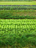 Salad and cabbage Stock Photos