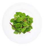 Salad of  chard and ruccola on plate Stock Images
