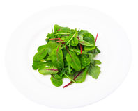 Salad of  chard and ruccola on plate Royalty Free Stock Images