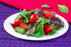 Salad with chard, spinach and tomatoes cherry Stock Photography