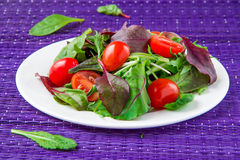 Salad with chard, spinach and tomatoes cherry Stock Images