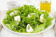 Salad with cheese mozzarella Royalty Free Stock Photo