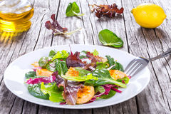 Salad with chicken breast and  lettuce leaves, baby spinach Stock Images