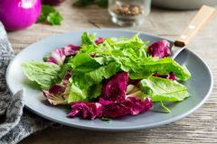 Salad with chicory. Stock Images