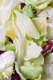 Salad close-up Royalty Free Stock Photos