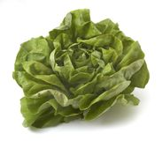 Salad closeup 1. Close up of fresh lettuce on white background  with clipping path, shadow not included Royalty Free Stock Images