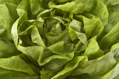 Salad closeup 2. Background of close up of fresh lettuce Stock Image