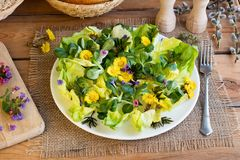 Salad with coltsfoot, ground elder and other wild plants. Salad with coltsfoot, ground elder and other wild edible plants royalty free stock photography
