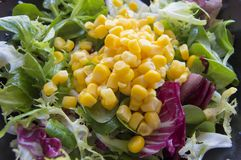 Salad with corn Royalty Free Stock Image