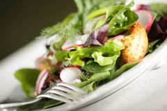 Salad with croutons. Plated salad of baby greens with golden, crispy croutons Royalty Free Stock Photography