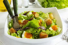 Salad with croutons Stock Photography