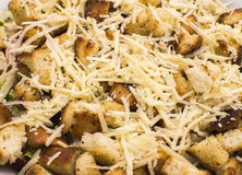 Salad with croutons, chicken, cheese and greens Stock Photography