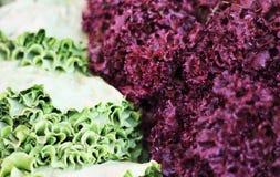 Salad. Stock Photography