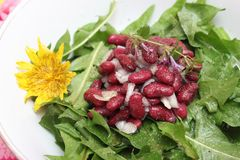 Salad of dandelion and beans. A salad of dandelion with red beans royalty free stock image