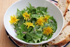 Salad of dandelion. A fresh salad of dandelion with yellow flowers stock photography