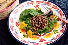 Salad of dandelion and lentils Stock Photos