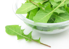 Salad from dandelions Royalty Free Stock Photo
