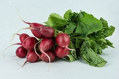Salad delight,. A bunch of radishes, against white back ground Royalty Free Stock Images