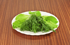 Salad and dill on a plate Stock Images