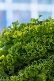 Salad at the farmers market, close up. Selective focus Stock Photography
