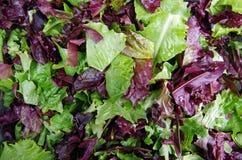 Salad field greens. Fresh mixed salad field greens piled closeup view Stock Image