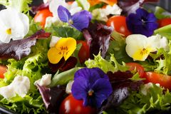 Salad of flowers with lettuce, tomatoes and cream cheese macro b. Salad of flowers with lettuce, tomatoes and cream cheese close-up background. horizontal royalty free stock images