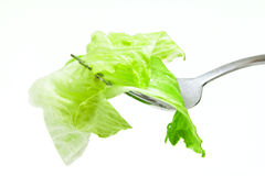 Salad on a fork Stock Photo