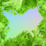 Salad frame Royalty Free Stock Images