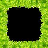 Salad frame Stock Photo
