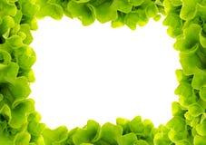 Salad frame Stock Image