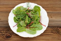 Salad of fresh chard leaves in white plate on wooden background Stock Photography