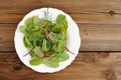 Salad of fresh chard leaves in white plate on wooden background Stock Image