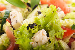 Salad from fresh green-stuffs and cheese. With spices Stock Photography