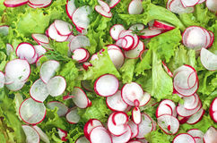 Salad. With fresh leaf lettuce, radishes, green onions and dill Stock Photography